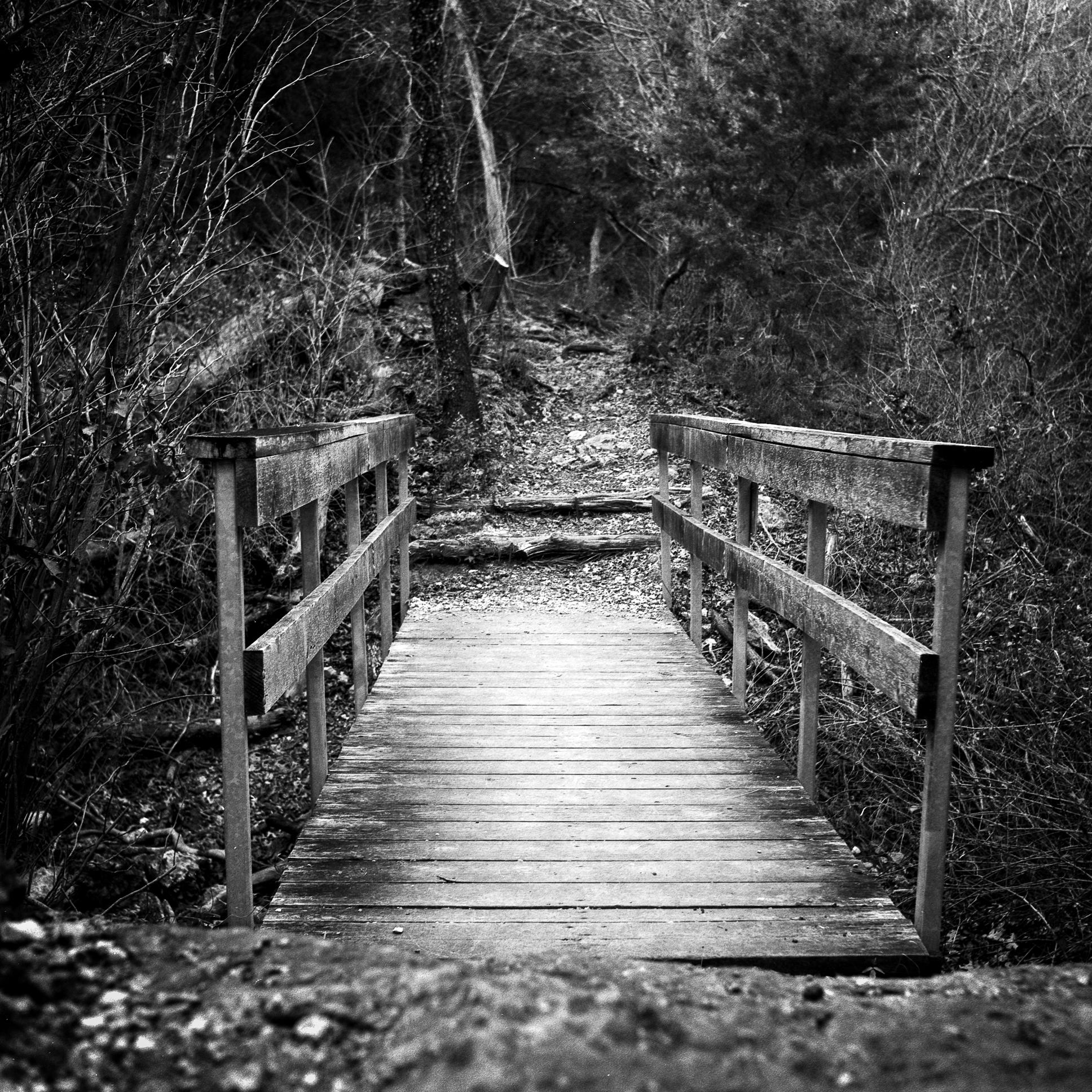 Bridge At Eisenhower Park